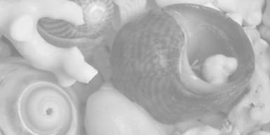Sea shells 3 of 3