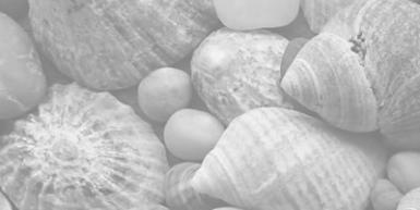 Sea shells 1 of 3